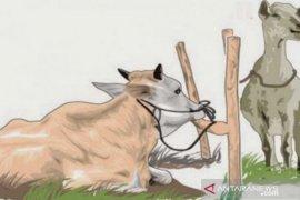 Dinas Pangan dan Pertanian Tanjungbalai periksa hewan kurban