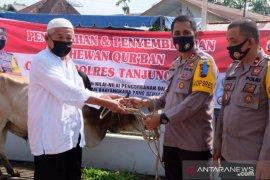 Polres Tanjungbalai serahkan  dua sapi kurban ke pengurus Masjid