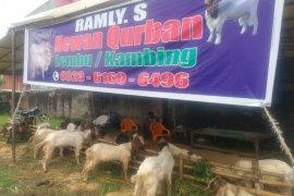 Penjualan hewan kurban di Medan tidak terpengaruh pandemI COVID-19
