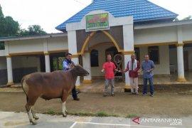 GLP salurkan bantuan sapi kurban di Gorontalo Utara