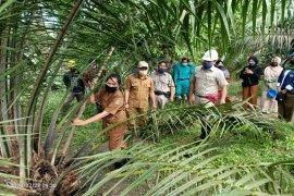 Asian Agri serahkan pengelolaan kebun sawit ke SMKN I Silangkitang Labusel