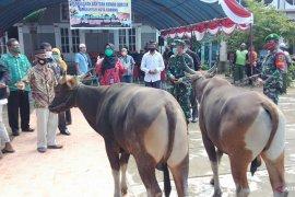 Pemkot Sorong serahkan 60 hewan kurban kepada masjid