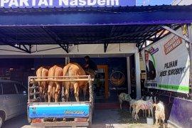 Nasdem Surabaya berkurban tiga sapi dan 12 kambing