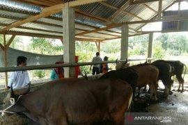 Distan Mukomuko pantau kesehatan hewan kurban