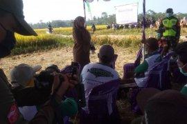 Bupati Pandeglang Irna Narulita minta petani optimalkan percepatan tanam