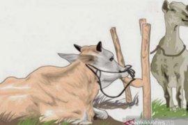 Akibat COVID-19, Jumlah hewan kurban Angkola Muaratais tahun ini menurun