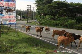 Angka kecelakaan jalan nasional Banda Aceh-Calang capai 49 kasus, ini sebabnya