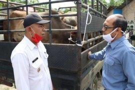 INALUM serahkan bantuan 20 ekor sapi kepada masyarakat Batu Bara