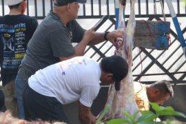 Pemotongan hewan kurban di Masjid Agung Medan ditiadakan