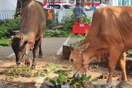 Distan Mukomuko pastikan hewan kurban sehat