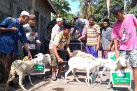 Warga Situbondo serahkan hewan kurban ke yayasan untuk penyembelihannya