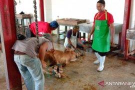 14 hewan kurban di Situbondo terjangkit cacing hati