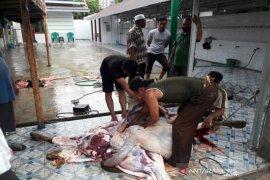 Mayoritas Muslim di Balangan laksanakan penyembelihan hewan kurban pada hari kedua