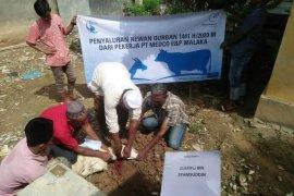 Medco E&P Malaka salurkan puluhan hewan kurban untuk masyarakat Aceh Timur