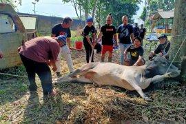 Dapat bantuan dari wali kota, Pokja wartawan Kota Pangkalpinang sembelih satu hewan kurban