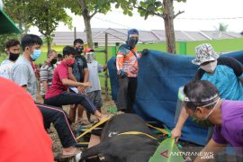 Jamaah LDII Kalsel tebar 355 ekor hewan kurban disituasi pandemi COVID-19