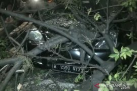 Tiga pengendara terluka akibat tertimpa pohon tumbang