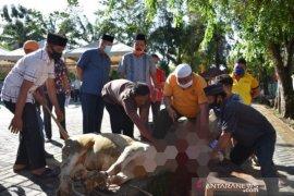 Pemkot Sibolga sembelih 20 hewan kurban