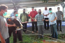 Pemkab Bangka Barat salurkan 850 paket daging kurban