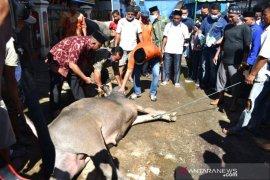 HIKKBAR sembelih 8 ekor hewan kurban disaksikan ketua gadang Bakhtiar Sibarani
