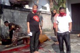 DPRD Bangka sembelih dua ekor sapi