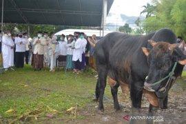 Wabup Bone Bolango apresiasi sapi kurban dari Presiden Jokowi