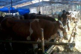 DKP3 Kota Sukabumi temukan hati sapi mengandung cacing