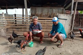 Pemprov Malut bagi-bagi buku panduan ternak ayam