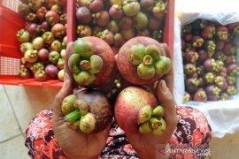 Pengusaha sewa pesawat demi ekspor buah sayur