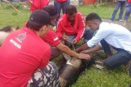 DPP PDI Perjuangan salurkan hewan kurban ke Simeulue