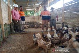 Peternak bebek di Pasar Maga dapat bantuan dari SMGP