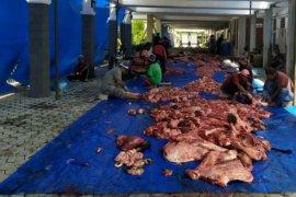 Keluarga besar PTPN IV sembelih 599 ekor hewan kurban