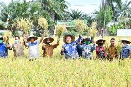 Pemkab Sergai harapkan petani terus berinovasi