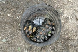 Petugas kebersihan di Siantar temukan 23 butir peluru tajam di parit
