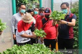 Pemkab Badung kembangkan pertanian hidroponik