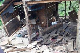 Rumah dan kebun sawit warga Aceh Jaya diobrak abrik kawanan gajah liar