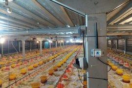 XL Axiata-Sierad Produce berhasil tingkatkan produksi unggas