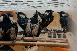 Penyelundupan 2.960 burung liar dari Sumatera digagalkan petugas