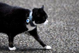 Kucing penangkap tikus di kantor Kemlu Inggris akan pensiun