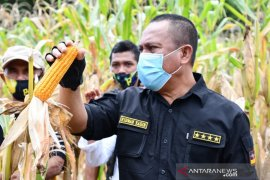 Pemkab Gorontalo Utara targetkan produksi jagung di atas 10 ton/ha