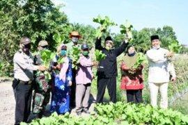 Kelompok wanita tani di Sergai kembangkan sayuran bebasis pekarangan