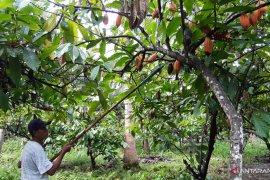 Bupati Gorontalo: Dusun Tumba dijadikan pusat pertanian organik