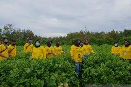 Pasukan kuning Perpus Palnam serbu petani Kampung Bunga