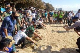 BKSDA Bali lepasliarkan penyu hijau hasil sitaan