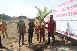 Kabupaten Landak lakukan peremajaan sawit masyarakat