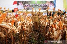 Noormiliyani bahagia petani Sido Makmur sukses panen jagung
