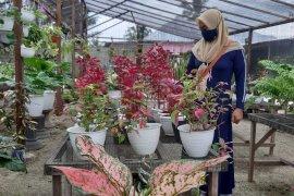 Bisnis bunga hidup di Gorontalo meningkat selama pandemi