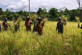 DTP Jayapura turunkan tenaga PPL kawal program ketahanan pangan
