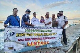 DKP Bangka Barat salurkan bantuan 5.000 benih kerapu