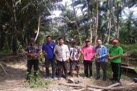 Semarak HUT Ke 75 RI, Pemuda dan Mahasiswa tanam ratusan mangrove di Langkat